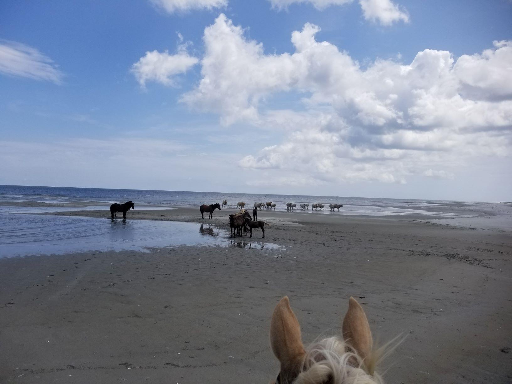Outer Banks Riding Stables tour